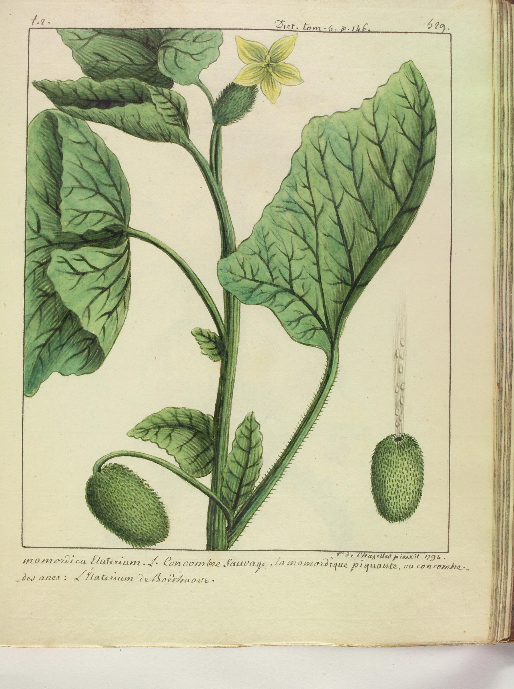 Contenu du Le Concombre sauvage