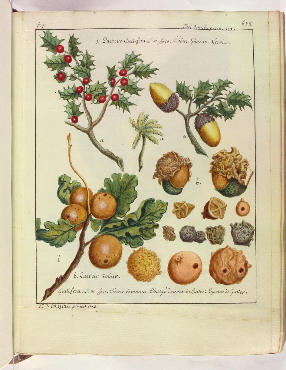 Contenu du Les fruits lorrains et leurs dérivés