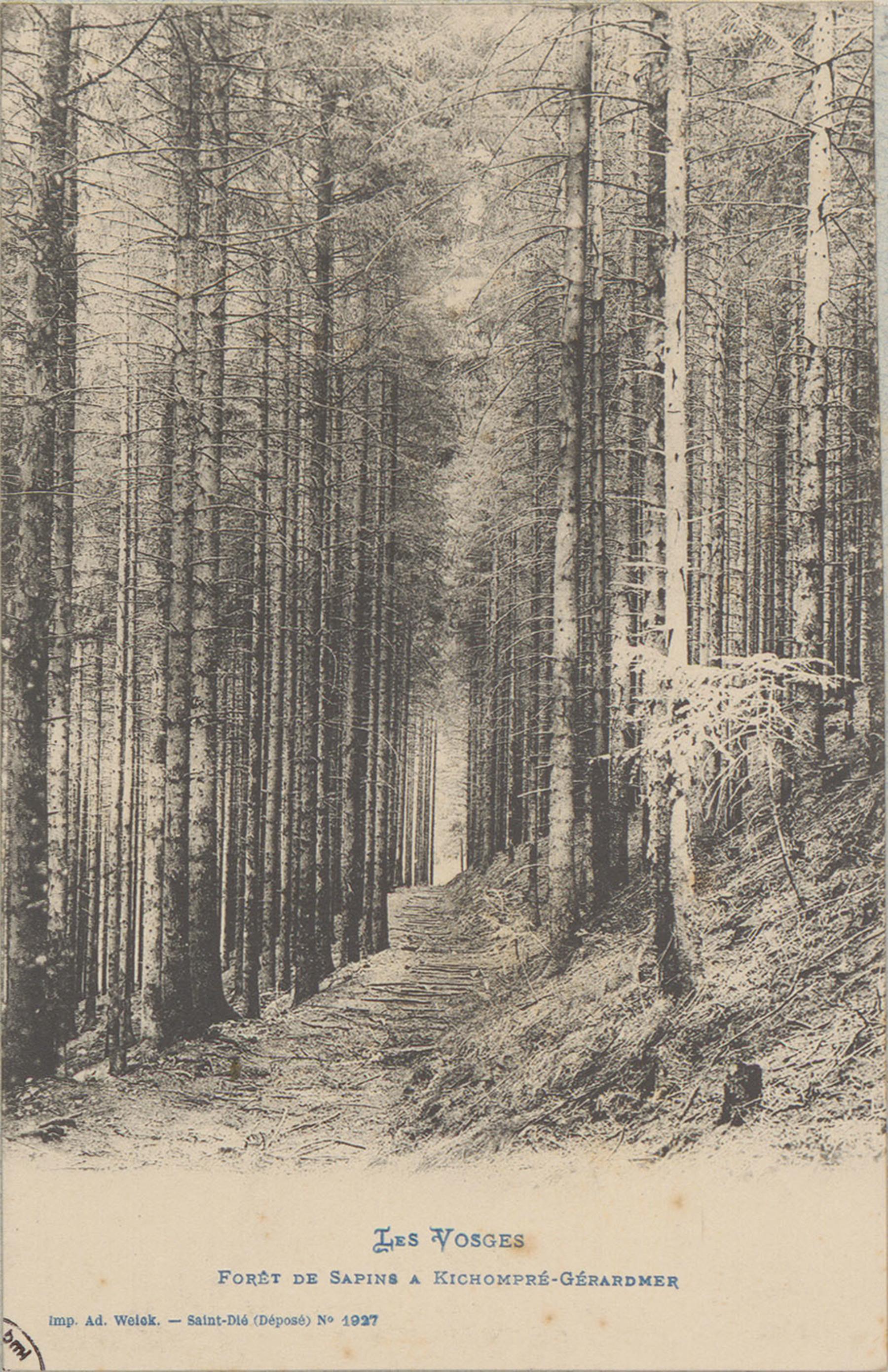 Contenu du Forêt de sapin à Kichompré-Gérardmer