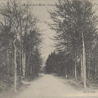 La forêt en Lorraine