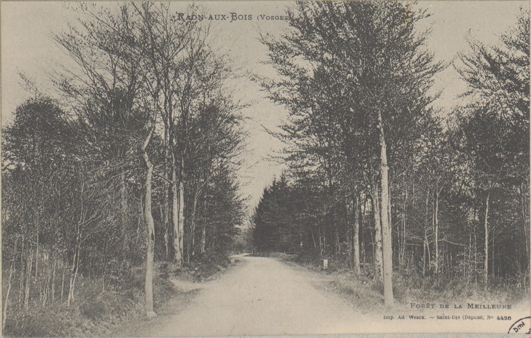 Contenu du Forêt de la Meilleure à Raon-aux-Bois (Vosges)