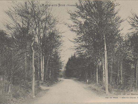 Contenu du La forêt en Lorraine