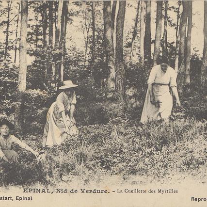 Contenu du Les plantes forestières