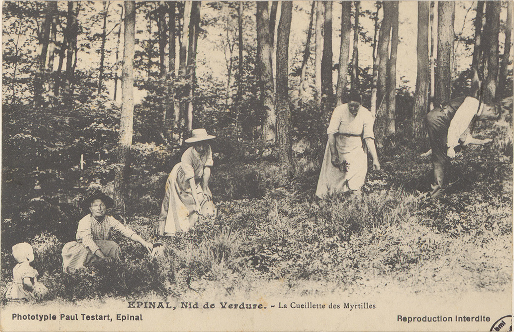 Contenu du La cueillette des myrtilles