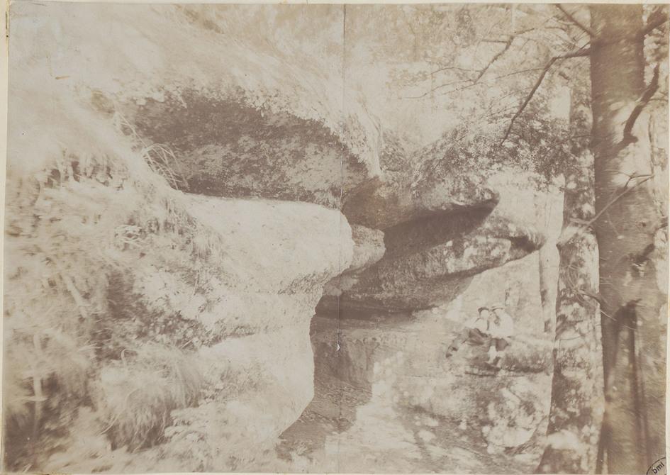 Contenu du La faune forestière dans les Vosges