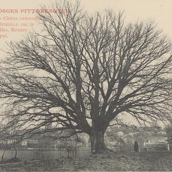 Ces arbres qui font la forêt